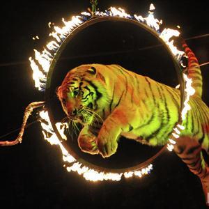 Цирки Тросны