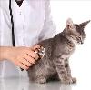 Ветеринарные клиники в Тросне
